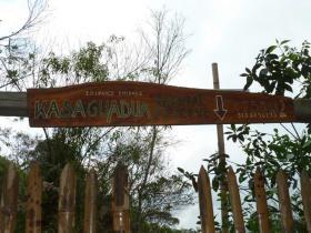 kasaguadua-2.JPG
